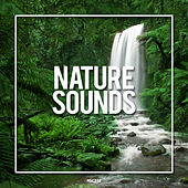 Nature Sounds 2019 - EP by Nature Sounds (1)