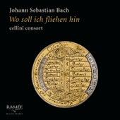 Bach: Wo soll ich fliehen hin de Cellini Consort