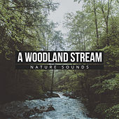 A Woodland Stream by Nature Sounds (1)