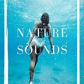 Nature Sounds: Rain, Rainforest and Jungle – Soothing Natural Sound Loopable by Various Artists