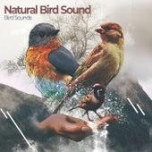 Natural Bird Sound von Bird Sounds