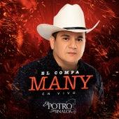 El Compa Many (En Vivo) by El Potro De Sinaloa