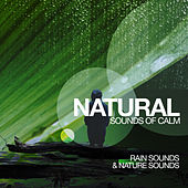 Natural Sounds of Calm by Rain Sounds