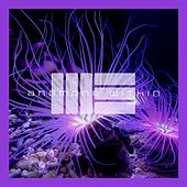 Anemone Within by Mark Elster