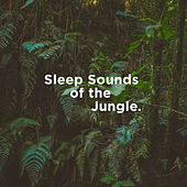 Sleep Sounds of the Jungle by Nature Sounds (1)
