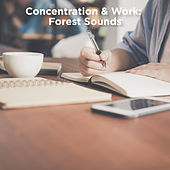 Concentration & Work: Forest Sounds by Nature Sounds (1)