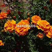 Marigolds by Moon