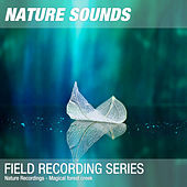 Nature Recordings - Magical forest creek by Nature Sounds (1)