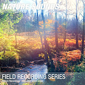 Nature Recordings - Beautiful forest creek by Nature Sounds (1)
