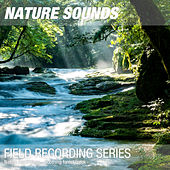 Nature Recordings - Soothing forest creek by Nature Sounds (1)