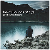 Calm Sounds of Life by Various Artists