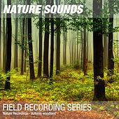 Nature Recordings - Autumn woodland by Nature Sounds (1)