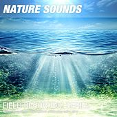 Nature Recordings - Hydrophone underwater noise asmr by Nature Sounds (1)