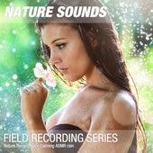 Nature Recordings - Calming ASMR rain by Nature Sounds (1)