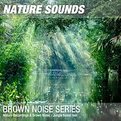 Nature Recordings & Brown Noise - Jungle forest rain by Nature Sounds (1)