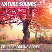 Nature Recordings - Soothing red forest by Nature Sounds (1)