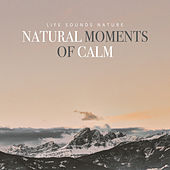 Natural Moments of Calm by Various Artists