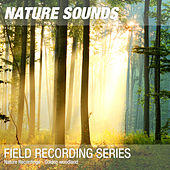 Nature Recordings - Golden woodland by Nature Sounds (1)