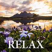 Relax by Dell