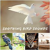 Soothing Bird Sounds by Bird Sounds
