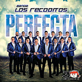 Perfecta by Banda Los Recoditos