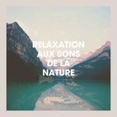 Relaxation Aux Sons De La Nature de Sounds Of Nature