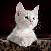 Cat Is Cute by Zayed Hassan