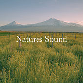 Natures Sound by Various Artists