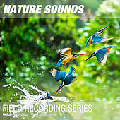 Nature Recordings - Calm jungle creek by Nature Sounds (1)