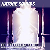 Nature Recordings - Peaceful temple by Nature Sounds (1)