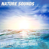 Nature Recordings - Peaceful sea waves de Nature Sounds (1)