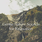 Gentle Nature Sounds for Relaxation by Various Artists