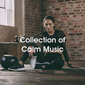 Collection of Calm Music by Various Artists