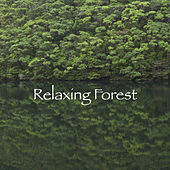 Relaxing Forest de Various Artists
