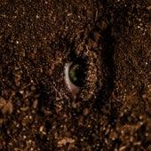 Caroço de Abacaxepa