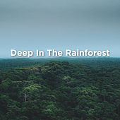 Deep In The Rainforest by Rain Sounds