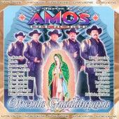 Ofrenda Guadalupana de La Fuerza De Los Amos Del Norte