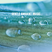 Gentle Ambient Music by Various Artists