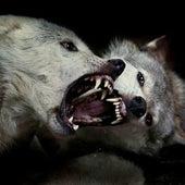 Dos lobos by J. Pelirrojo