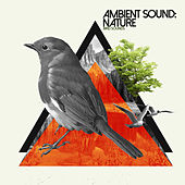 Ambient Sound: Nature by Bird Sounds