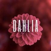Dahlia de Pallas