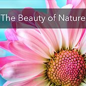 The Beauty of Nature by Various Artists
