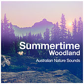 Summertime Woodland by Various Artists