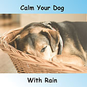 Calm Dog With Rain by Rain Sounds