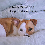 Sleep Music for Dog, Cat & Pets by Rain Sounds