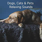 Dogs, Cats & Pets Relaxing Sounds by Rain Sounds