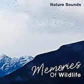 Memories of Wildlife by Nature Sounds (1)