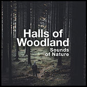 Halls of Woodland by Various Artists