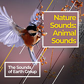 Nature Sounds: Animal Sounds by Bird Sounds