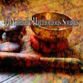 44 Naturally Harmonious Sounds de Meditación Música Ambiente